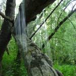 Harpe en pleine nature