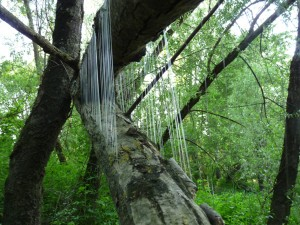 créer au sein même de la nature harpe aux sangliers